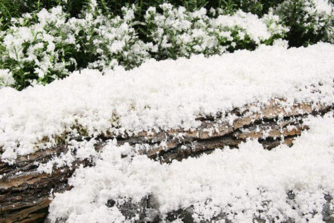 FSX full-size snowcel