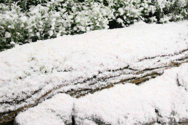 half-size snowcel